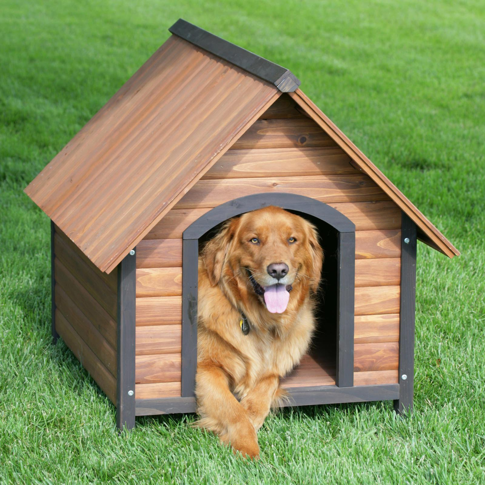 pet friendly single family rental home